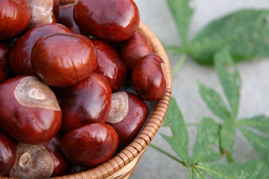 Enka-Food-Kestane enka food'dan alternatif bir gıda: kestane - Enka Food Kestane - Enka Food'dan alternatif bir gıda: Kestane